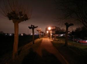 Motiv: Weg auf dem Rheindamm 1