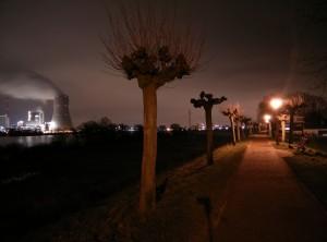 Motiv: Weg auf dem Rheindamm 2